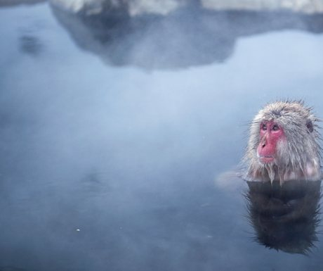 A-monkey-at-Jigokudani-hot-springs