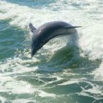 3 ethical dolphin experiences in Florida