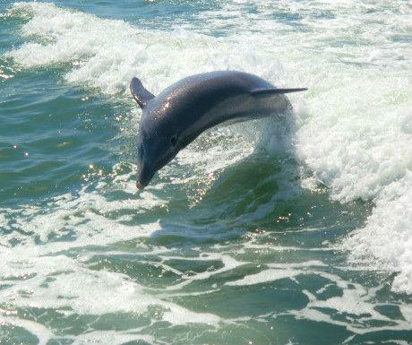 Tropics Dolphin Sighting