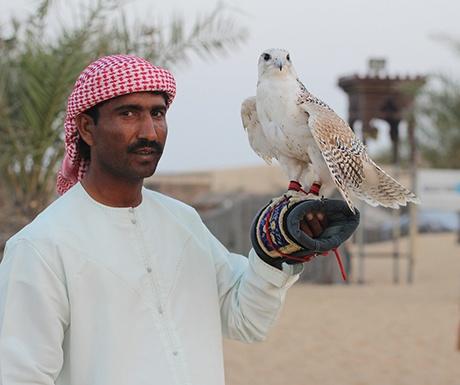 Dubai culture falconry