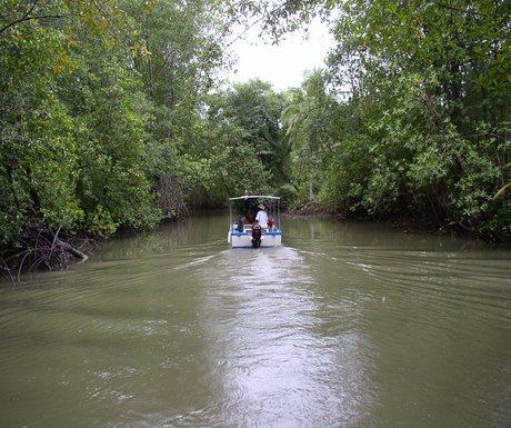 Manuel Antonio Mangrove Boat Tour