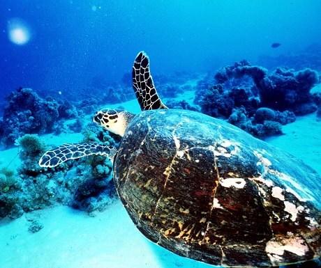 Marine conservations