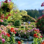 Springtime and flowers: gardens to visit in North America
