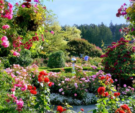 Butchart rose garden