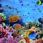 8 top picks for a scuba diving adventure of a lifetime
