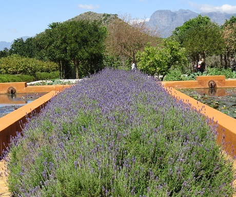 7-Restaurants-Cape Winelands-Babylonstoren-lavender