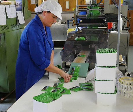 Kendal mint cake packing