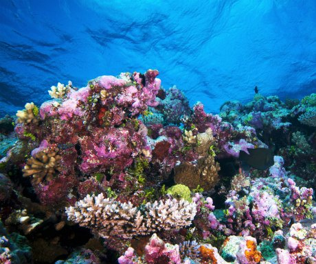 Sulawesi Coral Reef