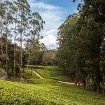 Top 5 experiences to celebrate Ceylon tea
