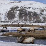 5 Wyoming wildlife experiences