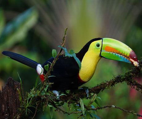 Birds-Costa-Rica