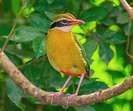 FEATHERY FRIENDS - BUNDALA BIRD SANCTURAY