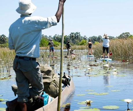 Paddle boarders Botswana