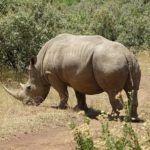 5 Kenyan parks to find the endangered rhino