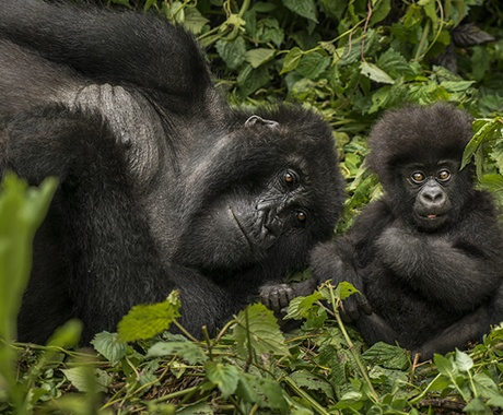 gorila-tours-africa