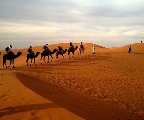 how to become successful travel agent program safari