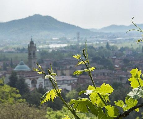 moscato-di-scanzo-mountains res