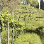 Delicious drives in Italy: Milan to Scanzorosciate
