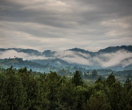 Bwindi forest landscapejpg