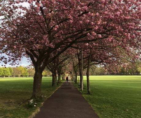 Edinburgh Meadows_460x385