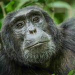 Top 5 experiences in Uganda