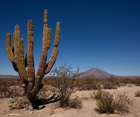 Los Cabos Baja Desert