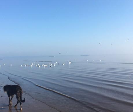 Portobello Beach_walk_460x385