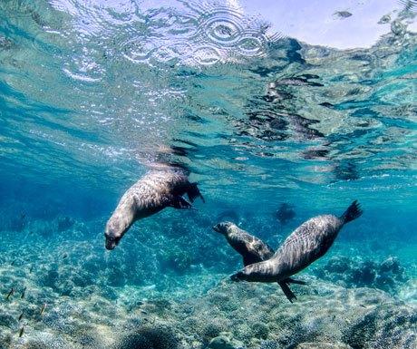 Sea lions, Los Cabos
