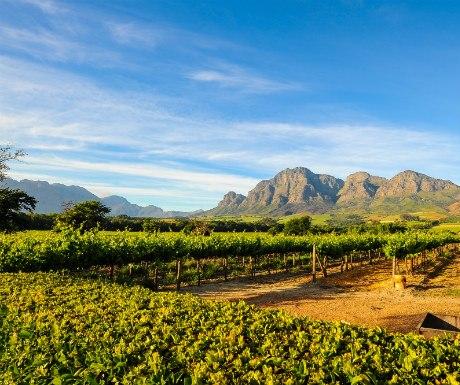 Western Cape Vineyards