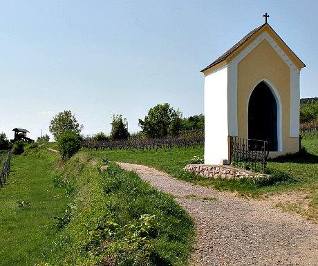 Wine experiences Vienna: Vineyard hiking trail near Gumpoldskirchen