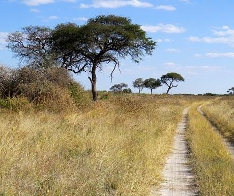 namibia-khaudum-veld