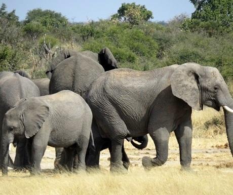 namibia-khaudum-elephant