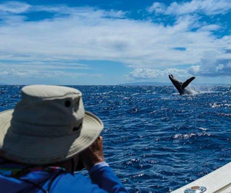 Saga Spirit of Discovery humpback whale