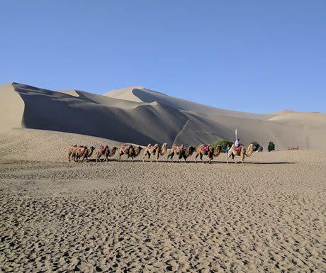 Camels at Mingsha Dunes, China