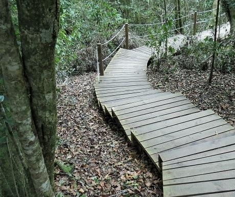 Garden Route, Tsitsikamma, Big Tree walkway