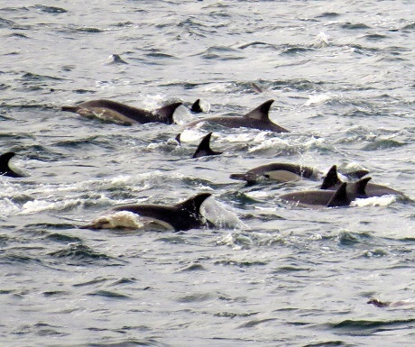 Garden Route, Plett, dolphins