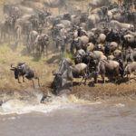 October in the Masai Mara