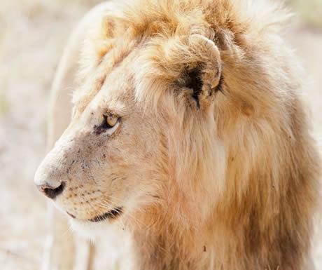 Namiri Plains, Serengeti National Park
