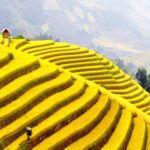 7 natural wonders you must see in Vietnam