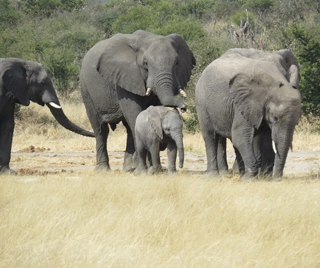 Five luxury lodges, Khaudum, elephant