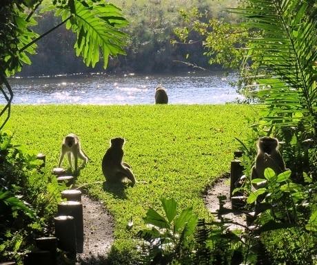 Five luxury lodges, Drotsky's, Samango apes