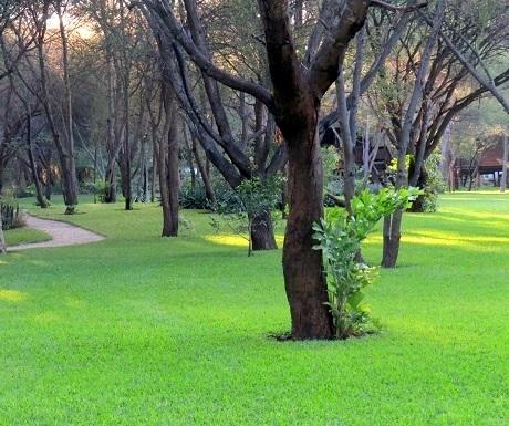 Five luxury lodges, Drotsky's, green lawn
