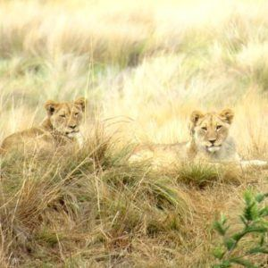 5 wonderfulfamily-friendly luxury safari lodges in South Africa