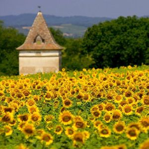 10 reasons why Occitanie may be the new Provence
