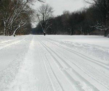 Vienna winter sports: cross country ski trail in Vienna Prater