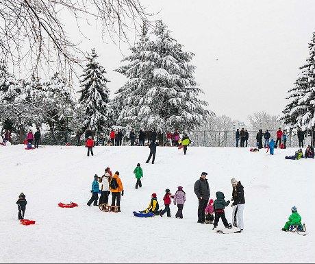Vienna winter sports: tobogganing