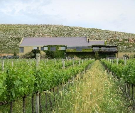 Hemel-en-aarde-wine-estates-newton-johnson