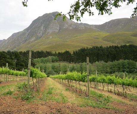Hemel-en-aarde-wine-estates-vineyards