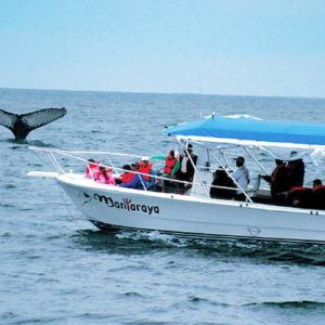 Want to whale watch? Try the Ecuadorian coast!
