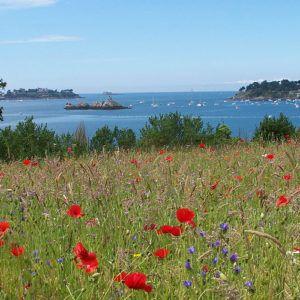 St Malo: rock around the rocks